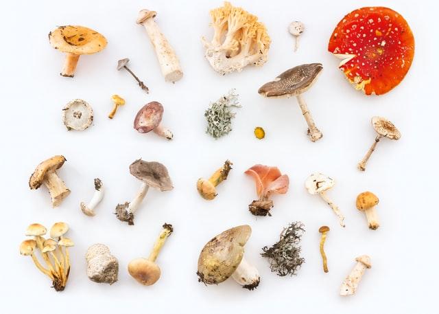 Magic Mushroom Retreat Mexico